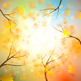 Autumn background with gold maple leaves