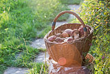 basket with mushrooms standing on the stub