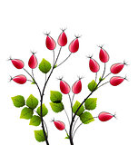 Vector rose hip