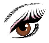eye brown vector