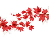 Vector autumn leaves