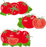 Tomato. Set tomatoes and parsley leaves. Isolated vegetables on white background