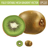 Kiwi on white background. Vector illustration