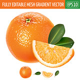 Orange on white background. Vector illustration