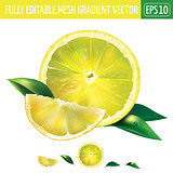 Lemon on white background. Vector illustration