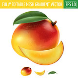 Mango on white background. Vector illustration