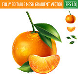 Mandarin on white background. Vector illustration