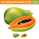 Papaya on white background. Vector illustration