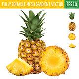 Pineapple on white background. Vector illustration