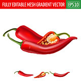 Hot red chili peppers on white background. Vector illustration