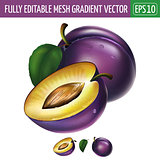 Plum on white background. Vector illustration