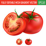 Tomato on white background. Vector illustration