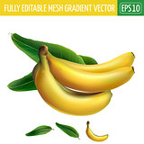 Banana on white background. Vector illustration
