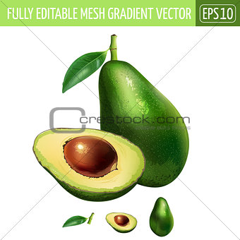 Avocado on white background. Vector illustration