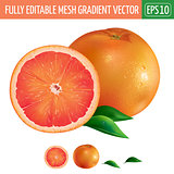Grapefruit on white background. Vector illustration