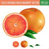 Grapefruit on white background. Vector illustration