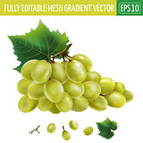 White grapes. Vector illustration
