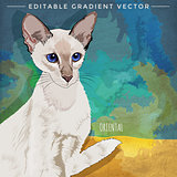 Oriental Shorthair Cat Illustration