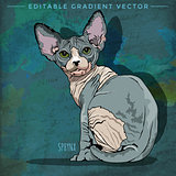 Sphynx Cat Illustration