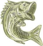 Largemouth Bass Fish Etching