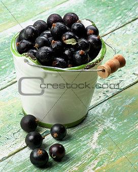 Fresh Berries of Blackcurrant