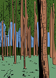 Forest background with tall trees