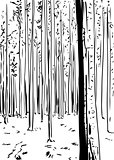 Outlined forest background with tall trees