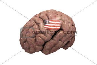 american brain