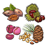 Collection of walnuts, chestnuts, pine nuts and peanuts