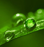 Globe in water drop green environment abstract