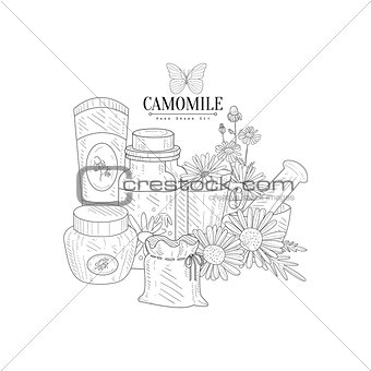 Camomile Natural Product Hand Drawn Realistic Sketch