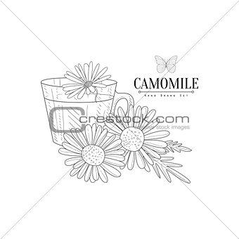 Camomile Herbal Tea Hand Drawn Realistic Sketch