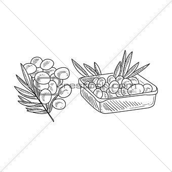 Olive Branch And Harvested Olives Hand Drawn Realistic Sketch