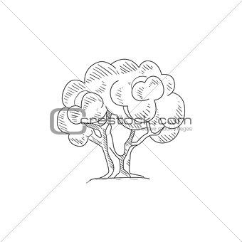 Olive Tree Hand Drawn Realistic Sketch