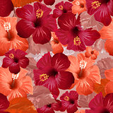 Red hibiscus flower. Seamless floral background