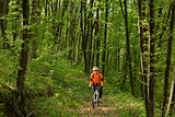 Biker on the forest road