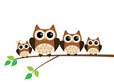 Vector Owl Family