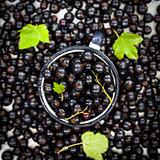 Fresh delicious organic black currant