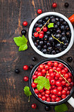 Fresh delicious organic red and black currants