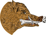 Wild Boar Razorback Bone In Mouth Drawing