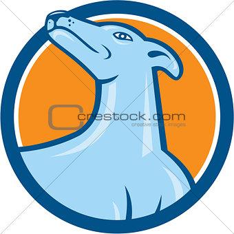 Greyhound Dog Head Looking Up Cartoon