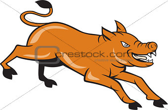 Angry Pig Jumping Attacking Cartoon