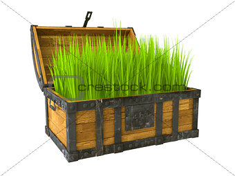 old chest filled with green grass