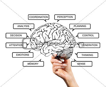 Diagram of brain functions