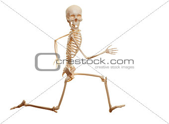 Skeleton running isolated on the white background