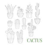 Different Cacti In Pots Hand Drawn Realistic Sketch