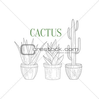 Three Tall Cacti In Pots Hand Drawn Realistic Sketch