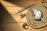 Rope and Seashells on Wooden Background