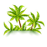 Coconut palms vector illustration jungle forest tropical
