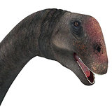 Brontomerus Dinosaur Head